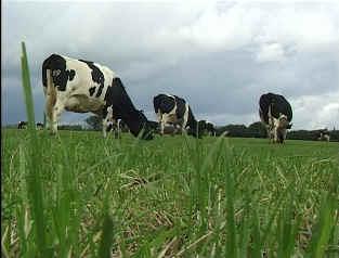 British Intensive Agricultural Grasslands - Production