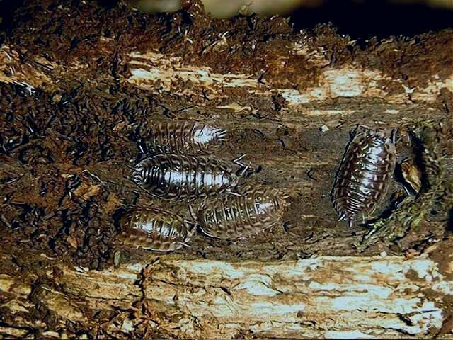How to get rid of woodlice in my bathroom weird tiny centipede bugs in bedroom yahoo answers for How to get rid of centipedes in my bathroom