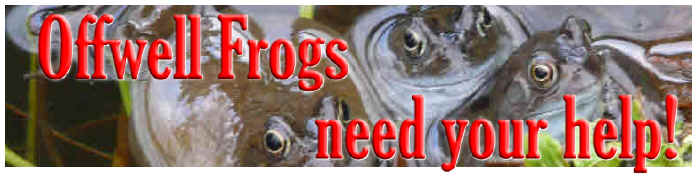 OffWell Wood Frog Appeal