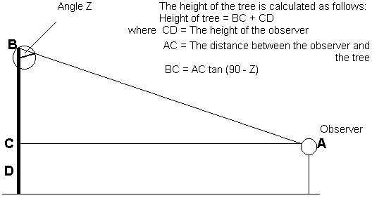 Using a clinometer to measure tree height