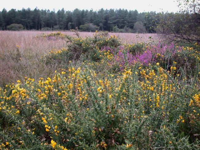 Much of East Devon would once have been covered in heathland.