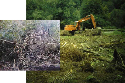 Clearing the project site. The inset picture illustrates the original rhododendron understory