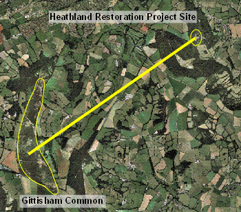 Relationship between Gittisham Common, the nearest lowland heath and the project site.