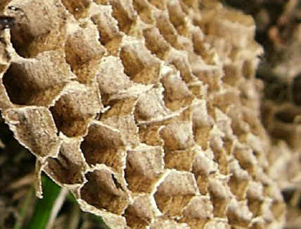 Part of a wasp's nest