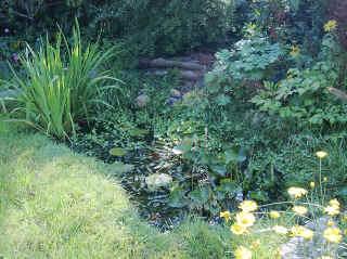 Garden Ponds Pond Making