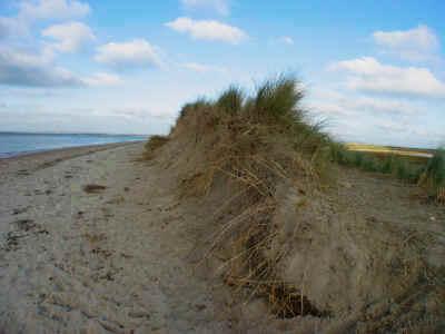 succession in sand dunes essay