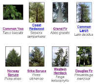 Treegal 7136 bytes